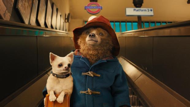 Paddington-2 10 January Movies We Are Looking Forward to Watching