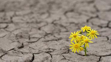 Leading Resilience Speakers