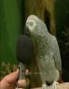 Booking Info for Einstein the Parrot
